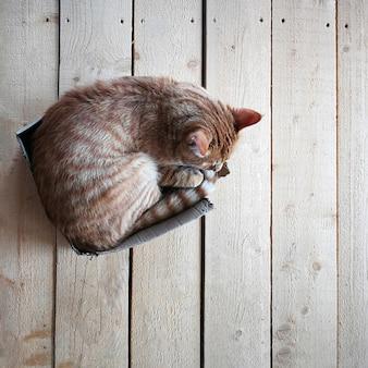 Gros chat rouge dans une petite boîte