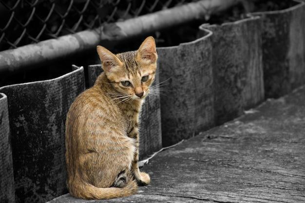 Gros chats assis sur le ciment au bord de la route.