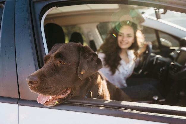 Gros chien noir en voiture