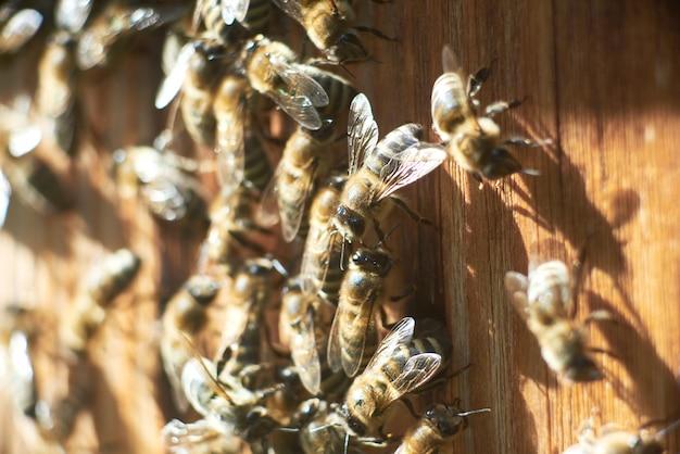 Gros coup d'abeilles sur rucher