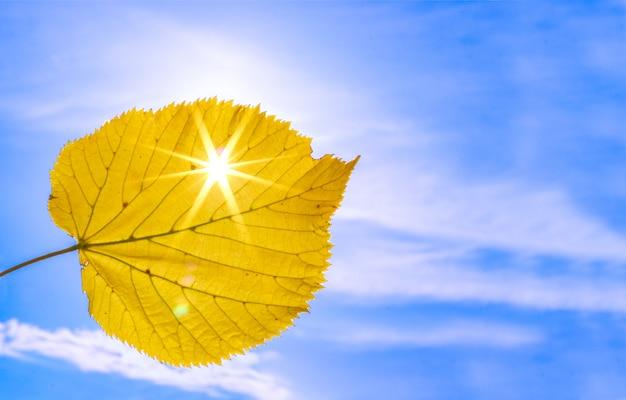 Gros coup de feuille d'automne jaune avec les rayons du soleil qui brille