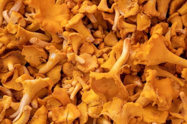 Gros coup de tas de champignons jaunes