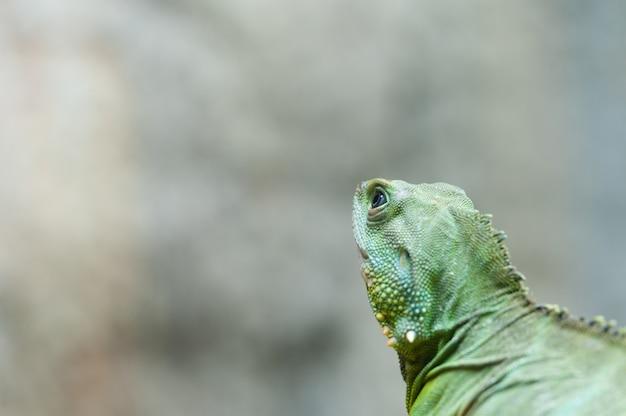 Gros dragon d'eau de chinease