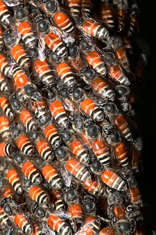 Gros groupe abeille en nid d'abeille sur l'arbre
