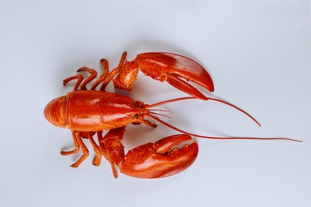 Gros homard rouge cuit isolé sur une surface blanche