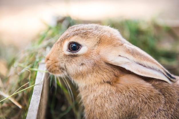 Gros lapin se tient dans la boîte en bois avec du foin et de l'herbe.