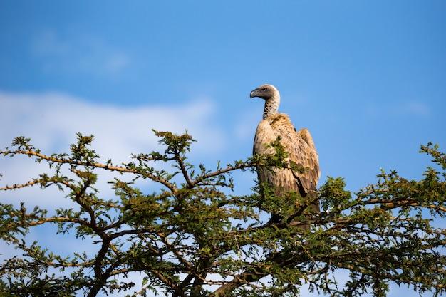 Un gros oiseau de proie est assis sur une branche