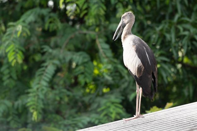 Gros oiseau sur le toit.