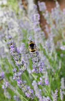 Gros plan d'une abeille assise sur une fleur violette