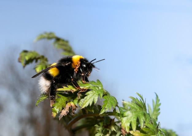 Gros plan d'une abeille assise sur une plante