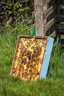 Gros plan d'abeilles sur cadre de ruche super