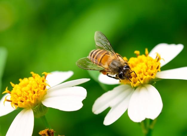 Gros plan des abeilles sur fleur