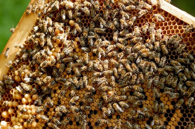 Gros plan, de, abeilles, sur, nid d'abeille, dans, rucher