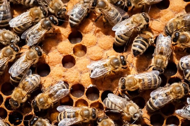 Gros plan, abeilles, nid d'abeille, ruche