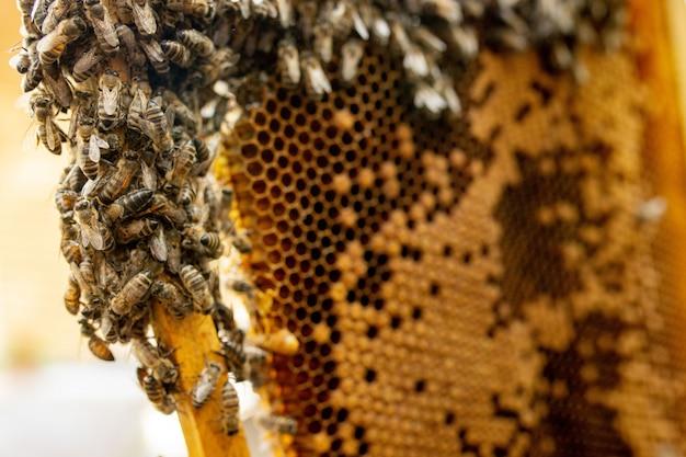 Gros plan des abeilles sur nid d'abeilles dans le rucher - mise au point sélective, copy space