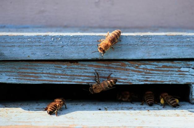 Gros plan d'abeilles sur une surface en bois pendant la journée