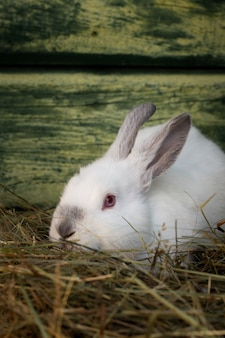 Gros plan, adorable, blanc, lapin pâques
