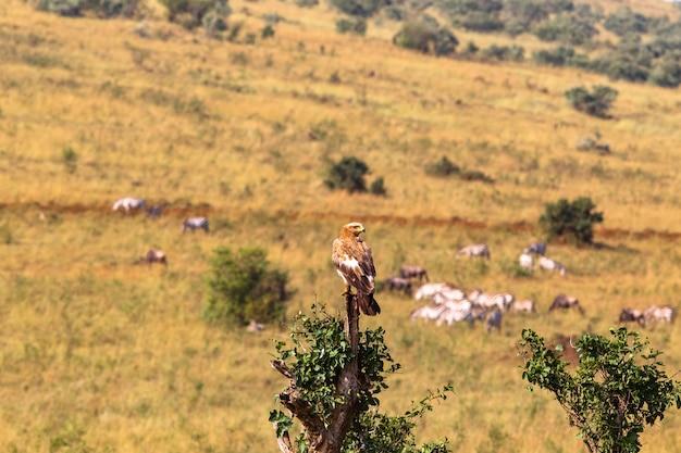 Gros plan sur l'aigle des steppes sur l'arbre