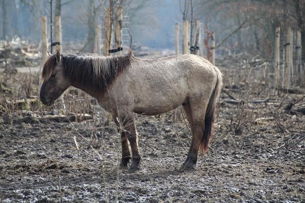 Gros plan d'un âne mignon debout sur le sol rocheux