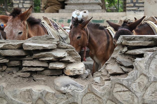 Gros plan sur des ânes dans la ferme