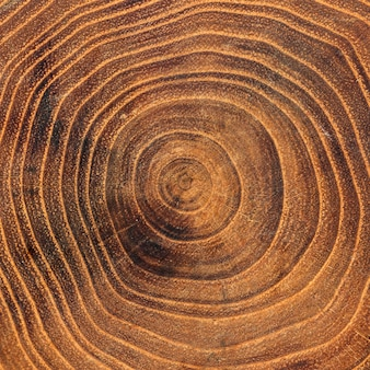 Gros plan d'anneaux de croissance annuels en bois