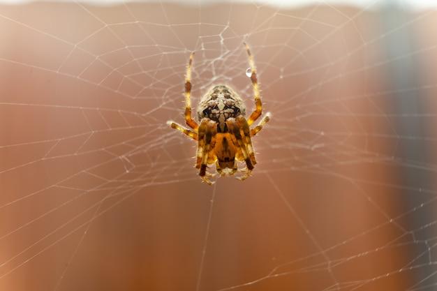 Gros plan d'une araignée au milieu de sa toile.