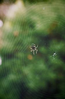 Gros plan d'une araignée aux pattes rayées, filant une toile avec verdure floue