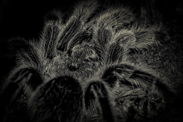 Gros plan d'araignée effrayant