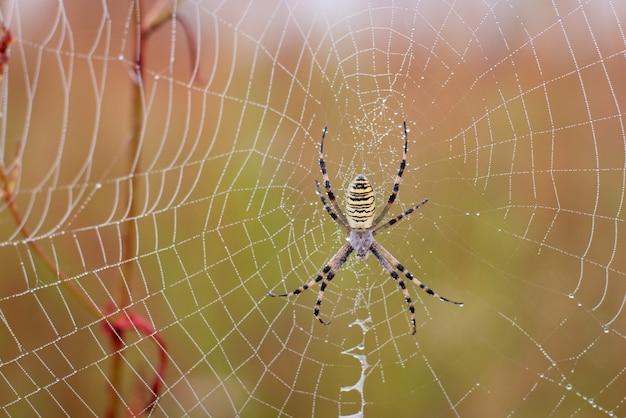 Gros plan d'une araignée sur son filet