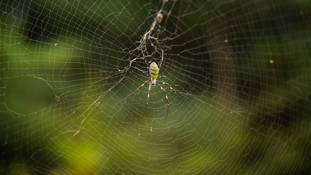Gros plan d'une araignée sur une toile d'araignée sur un arrière-plan flou