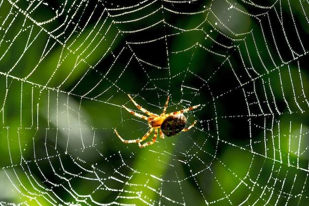 Gros plan d'une araignée sur une toile d'araignée