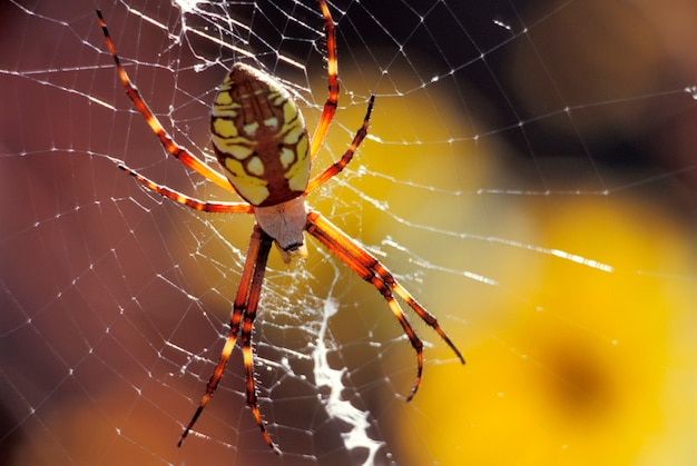 Gros plan d'araignée et toile d'araignée