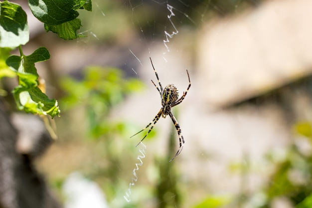 Gros plan d'une araignée sur une toile dans la nature