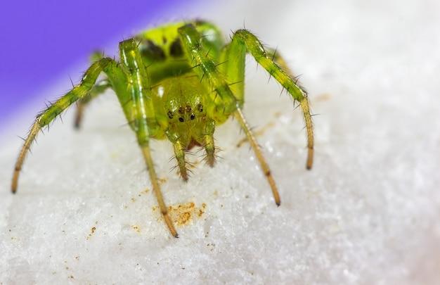 Gros plan d'une araignée verte
