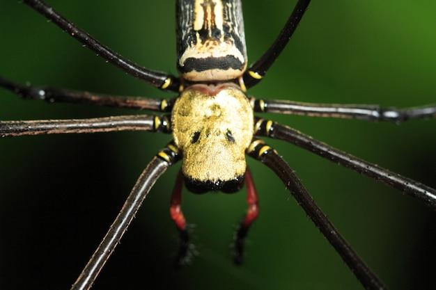 Gros plan, araignée