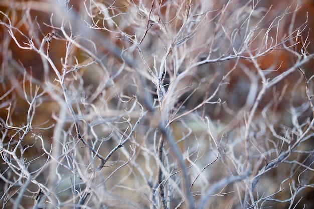 Gros plan d'arbre de branche sèche, texture macro d'un buisson sec gris.