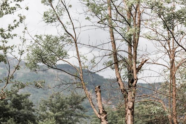 Gros plan, arbre, forêt