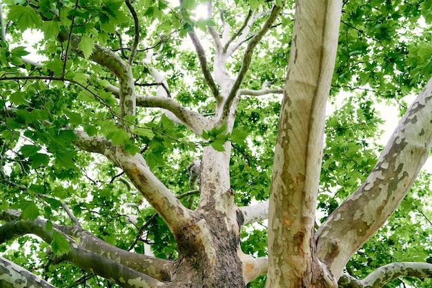 Gros plan d'arbre plat de propagation