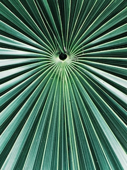 Un gros plan d'un arbre tropical exotique laisse