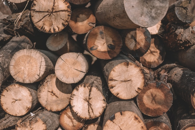 Gros plan des arbres coupés, des cabanes en rondins, des rondins reposent un tas le long de la route