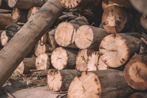 Gros plan des arbres coupés, des cabanes en rondins, des rondins reposent un tas