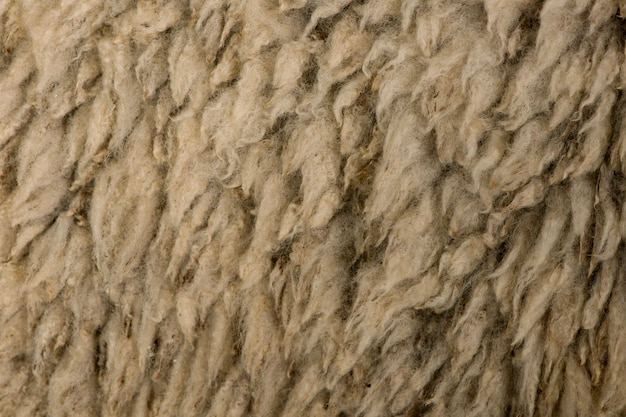 Gros plan arles laine de mouton mérinos
