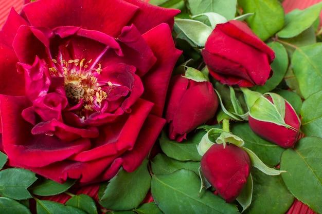 Gros plan artistique pétale de rose rouge