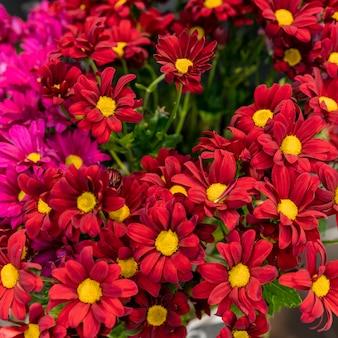 Gros plan assortiment de fleurs élégantes