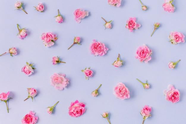 Gros plan assortiment de roses concept