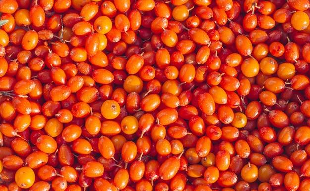 Gros plan de baies d'argousier orange. super nourriture et nourriture saine