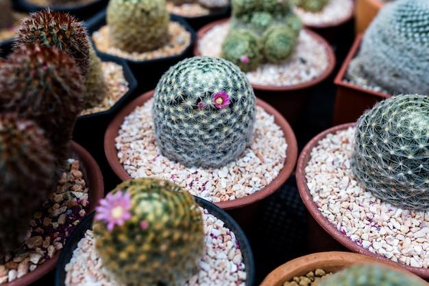 Gros plan baril cactus