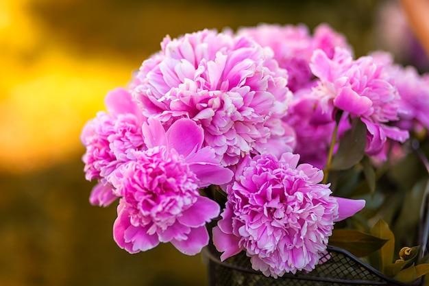 Gros plan d'un beau bouquet frais de pivoines roses dans le jardin d'une journée d'été sous le soleil brûlant