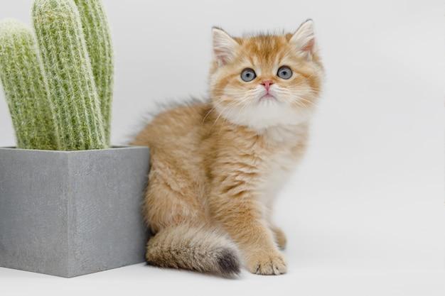 Gros plan beau chat