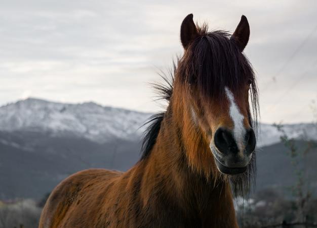 Gros plan beau coup d'un cheval brun avec des montagnes